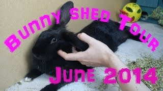Bunny Shed Tour | June 2014