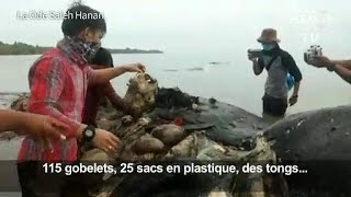 Six kilos de plastique dans l'estomac d'un cachalot