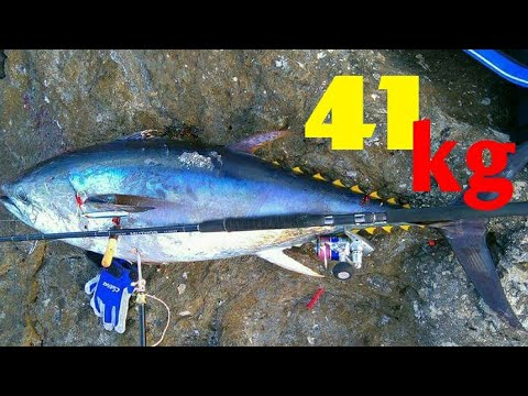 SHORE JIGGING TUNA 41kg!(THE UNEXPECTED GIANT)