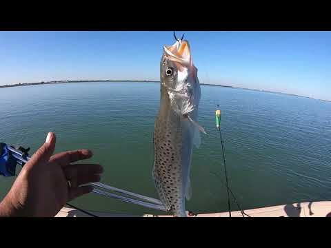 Fishing Corpus Christi, Texas!!Around The Bay!!!