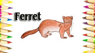 How to Draw a Ferret - How to Draw Animal step by step - SLD