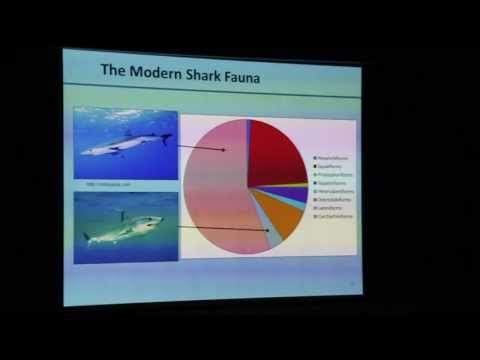 The Rise and Fall of the Neogene Giant Sharks