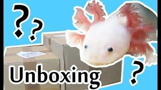 Axolotl Zubehör 🐟 💖  Interaquaristik Unboxing 🌱Kaltwasserpflanzen & Höhlen