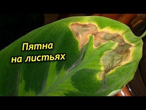 Пятна на листьях комнатных растений. Почему появляются и что с этим делать!