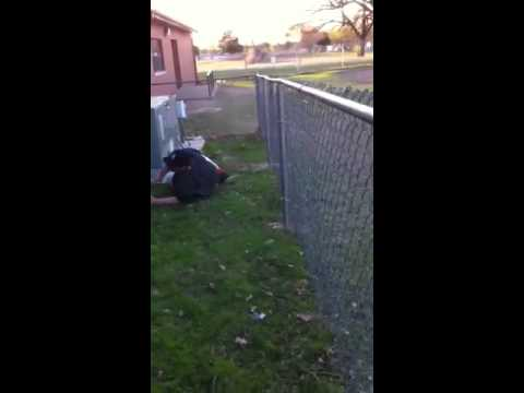 Colton trying to jump fence