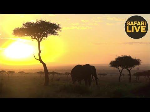 safariLIVE - Sunrise Safari - September 23, 2018