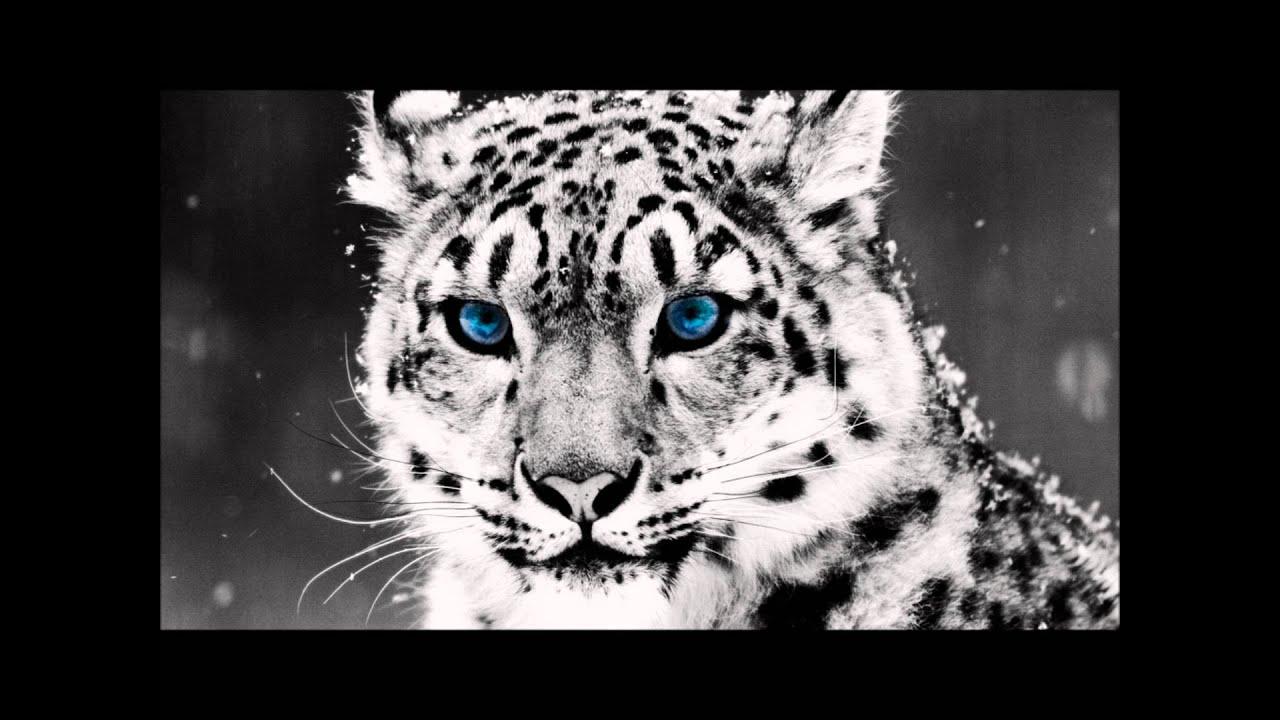 3d Tiger Wallpapers For Desktop Electus Memories Youtube