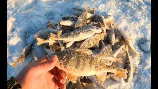 Рыбалка как в сказке Безумный клёв окуня Зимняя рыбалка на мормышку