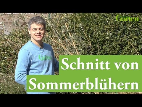 gartentipp schnitt von sommerbl hern youtube. Black Bedroom Furniture Sets. Home Design Ideas