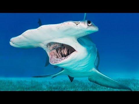 सबसे बड़ा और खतरनाक समुद्री जीव BIGGEST Sea creatures in the world - youtube thumbnail