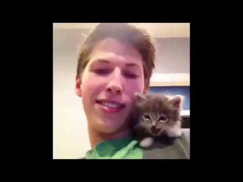 The best classic cat videos #1