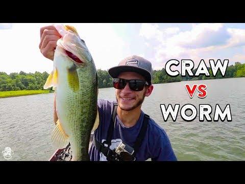 Craws Vs. Worms | Soft Plastic Lure Breakdown