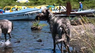 お仲間さんたちと本栖湖へ水遊びに行ってきました.