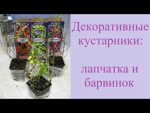Сайт о саде