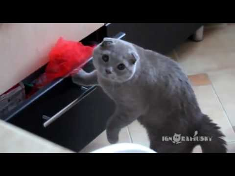 Cat Opening Drawer Gets Busted