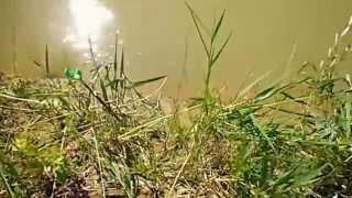 Рыбалка на Егорлыке!!!.