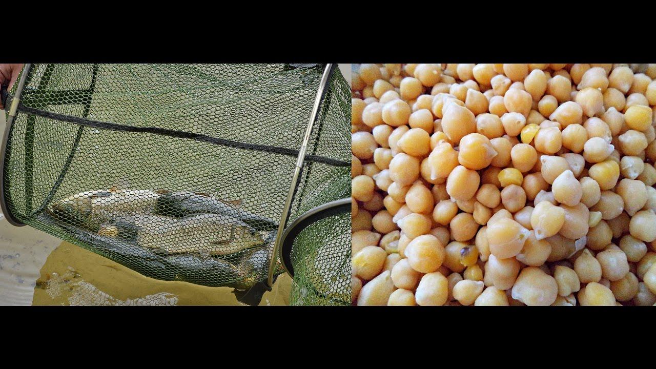 как запарить горох для рыбалки видео