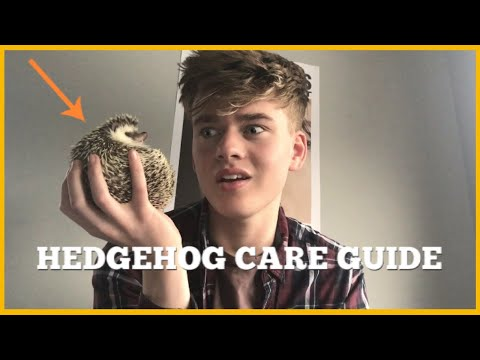 HEDGEHOG CARE GUIDE (Everything You Need To Know!)