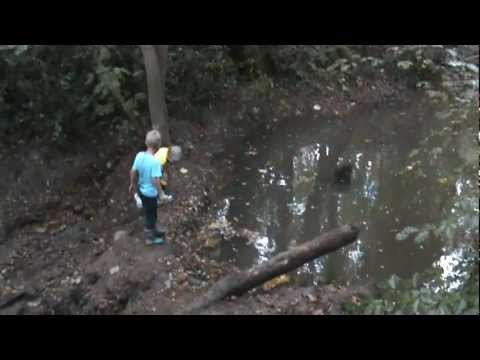 Super Awesome Dam Building in a Woodland Stream