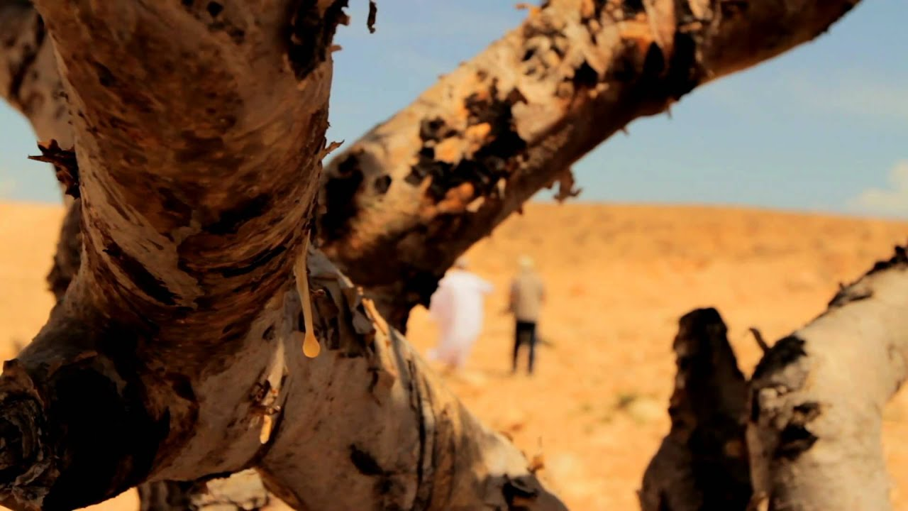 Ministry of Agriculture Loban Tree 2011