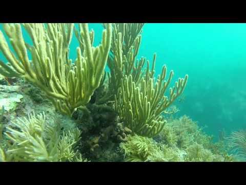 Scuba Dive at Benwood wreck and Molasses reef.