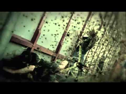Download Machine Head // Locust (OFFICIAL VIDEO)
