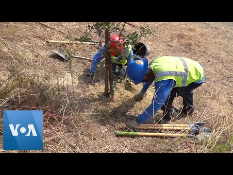 California Youth Conservationists Plant Trees, Restore Habitats During Pandemic