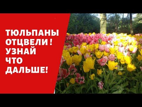 Отцвели тюльпаны! Поливать ли, Выкапывать ли??? Возможно и нет!