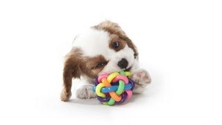 Pick The Right Supplies & Equipment | Puppy Care