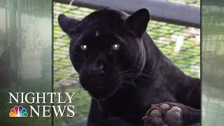 Woman Attacked By Jaguar Reportedly While Taking Photo At Arizona Zoo | Nightly News
