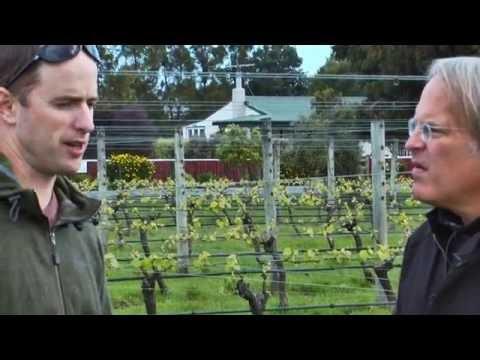 JAMESSUCKLING.COM - New Zealand - The Wines Of Martinborough