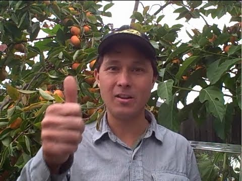 Can I eat the tops of Carrots and More Organic Gardening Questions & Answers