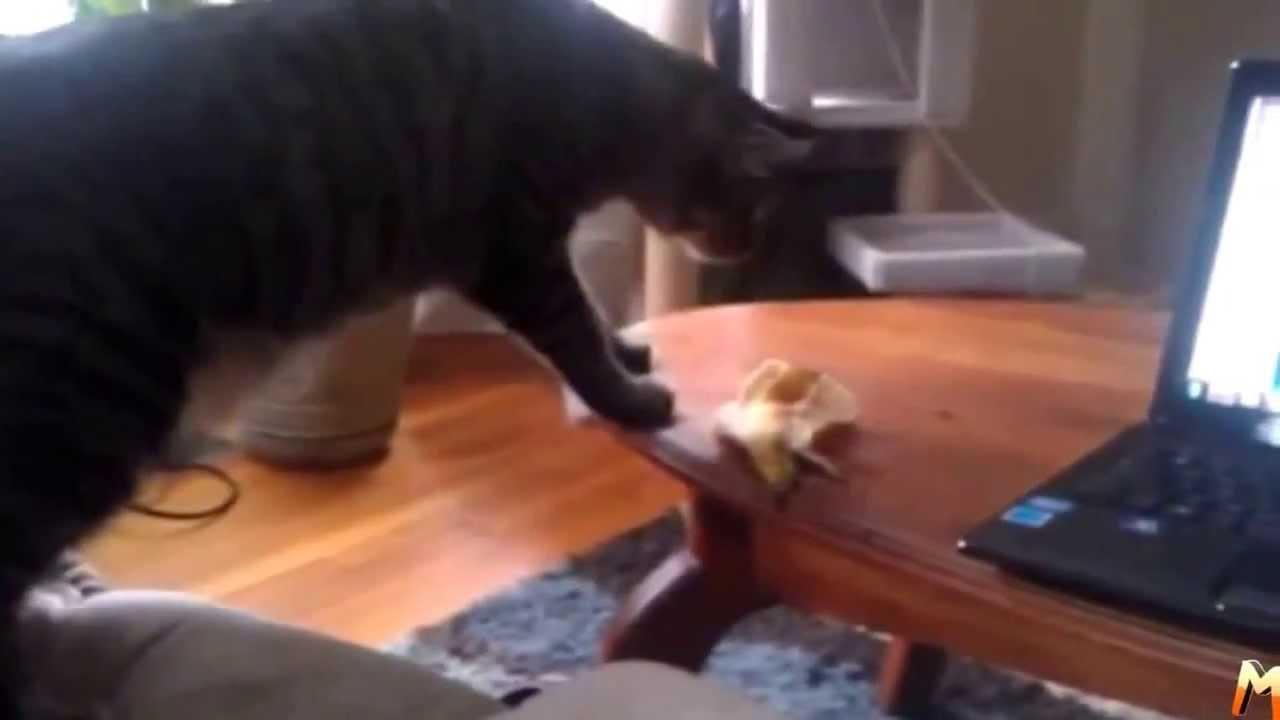 Смешные Кошки – Приколы (выпуск 3)