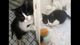 Несчастный котенок еле стоял на лапках, когда его нашли в подвале – (МатроскинТВ)
