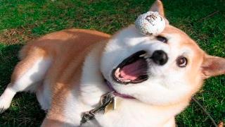 Dog Fails - Dog Fails Compilation 2017