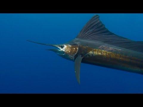 Costa Rica Fishing 2018 With Epic Sportfishing In Los Sueños, Costa Rica