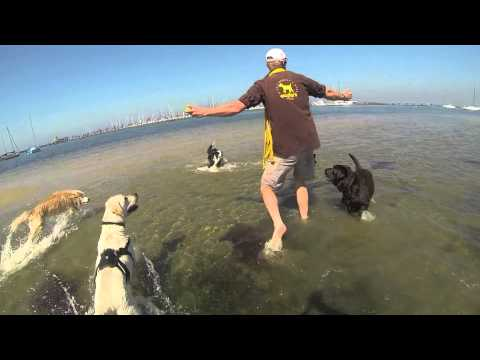 Happy Dogs at the Beach - Woofers World Melbourne