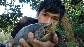 Mengenal kura-kura batok ( CUORA AMBOINENSIS )