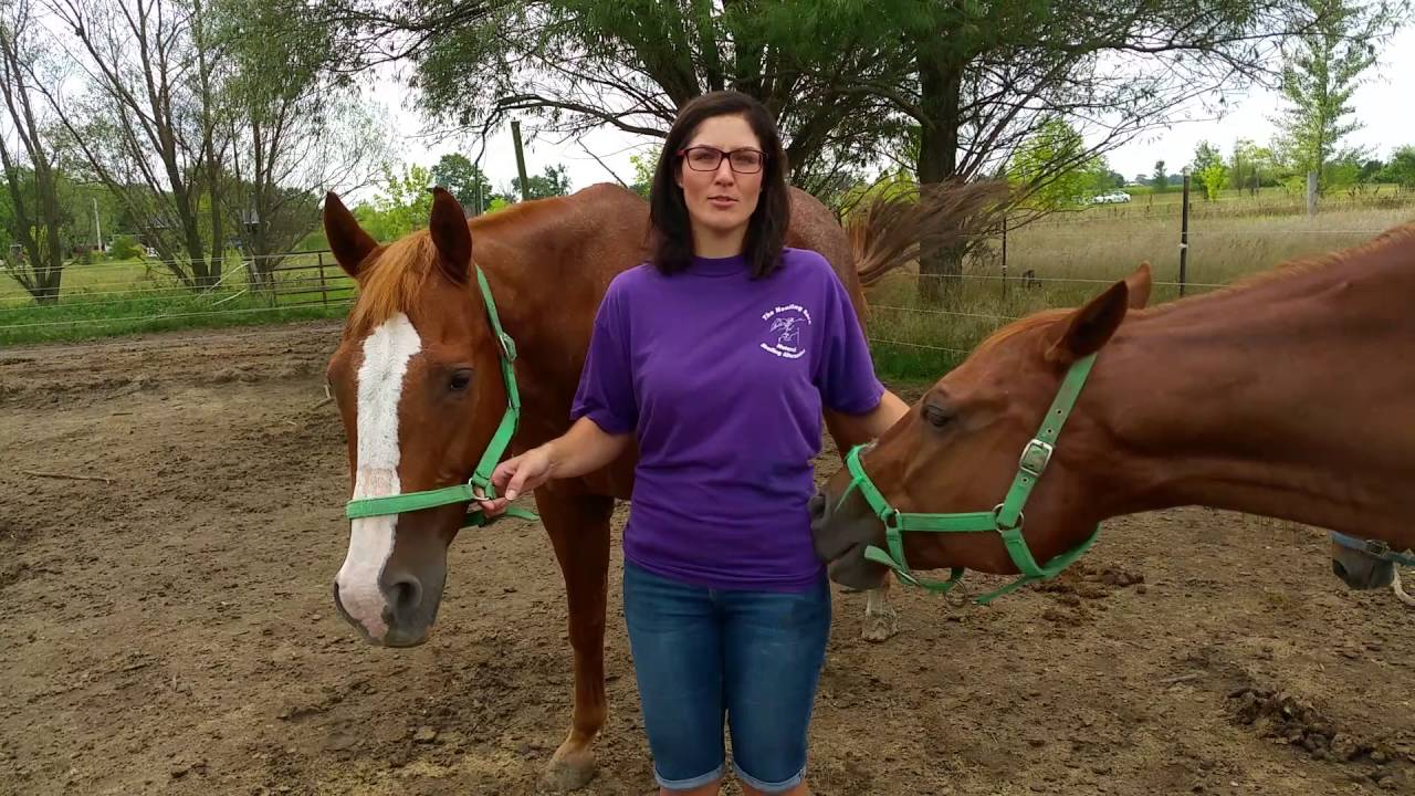 the healing barn equine rescue for crk balanced riding youtubethe healing barn equine rescue for crk balanced riding