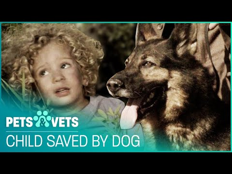 Calgary Rescue Dogs Save Trapped Toddler's Life Twice! | Pet Heroes | Pets & Vets