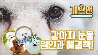 [개스맨] 강아지 눈물 원인과 해결책!ㅣ반해