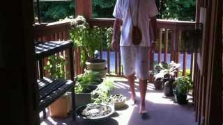 Growing Food: Organic Vegetable Balcony Tour- Part Ii (magic Seed)