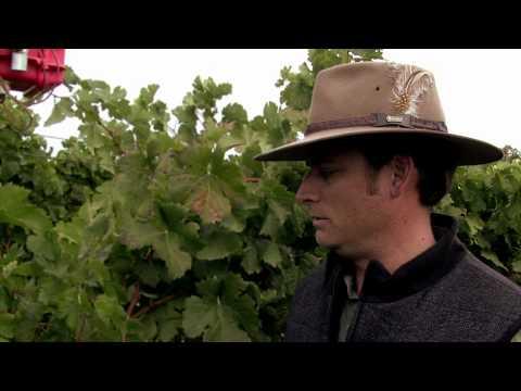 Vineyard Technology: Sustainably Managing Water Use