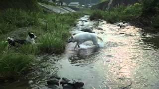 仲良し清とランの激しい川遊び!