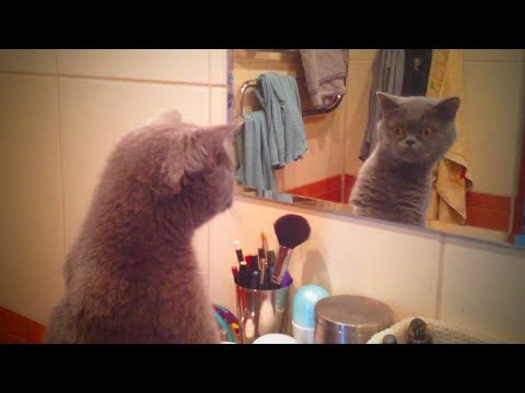 Pets Vs Mirror 🐱🐈 Cats Hilarious Reaction to Mirror (Full) [Funny Pets]