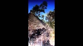 AFRIQUE   MAT   CAMISON  clip vidéo