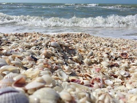 Best Beach For Shells -  Sanibel And Captiva Lslands Florida