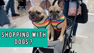 Visiting Starfield The Biggest Dog Friendly Mall With Two Frenchies