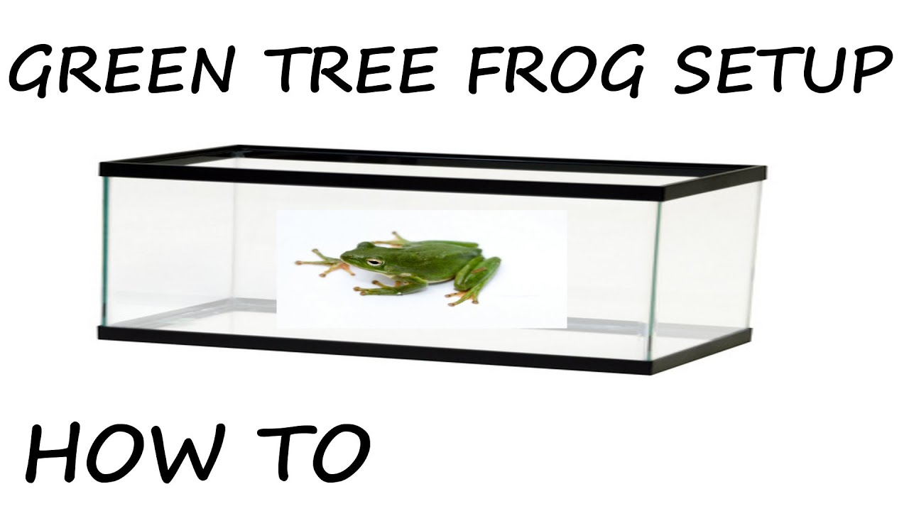 How To Setup A Green Tree Frog Enclosure Youtube