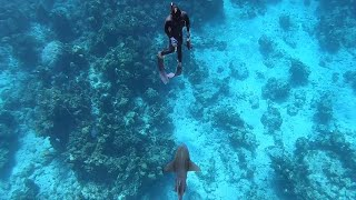 Competing with Sharks for Food! - Spearfishing Fails and our Reactions!